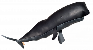 The GF Sperm Whale