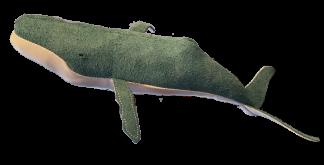 Blue suede humpback whale calf