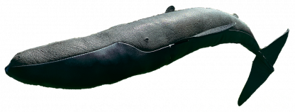 Leather Fin Whale