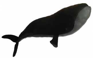 Black Leather Right Whale