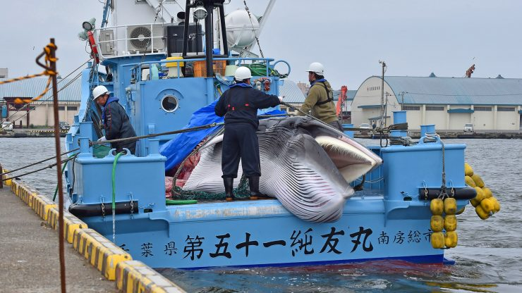Japan continues to kill whales